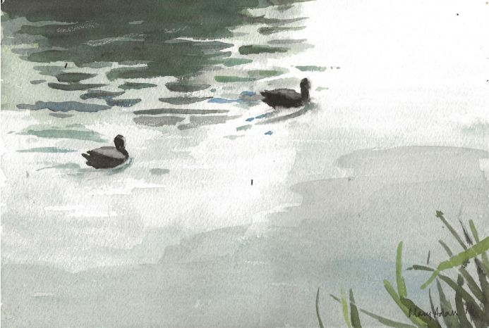 Coots w/col by Mary Adam