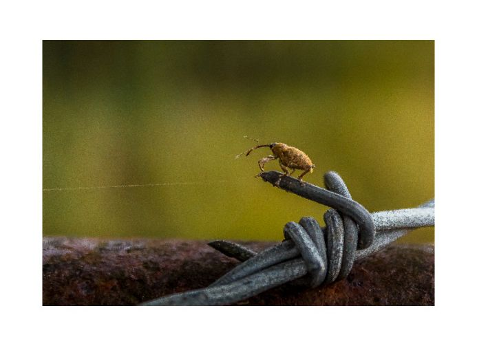 Bug on a wire
