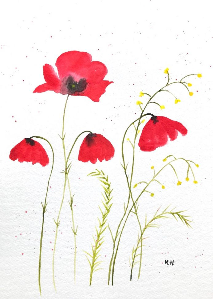 Red poppies flowers nr1