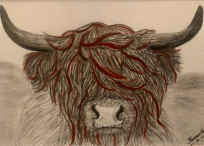 Highland cow - brown