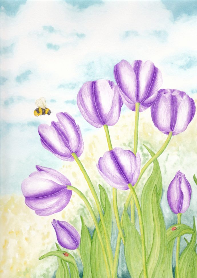 Tulips and Ladybirds